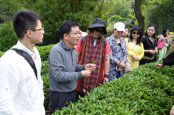 茶溪谷茶文化之旅
