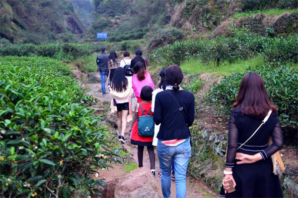 武夷山茶文化之旅